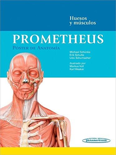 9788498359619: Prometheus. Póster de Anatomía: Huesos y músculos