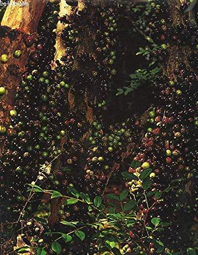 9788572340083: Frutas Brasil frutas (Portuguese Edition)