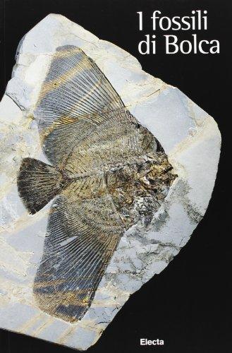 9788843571888: Fossili di Bolca