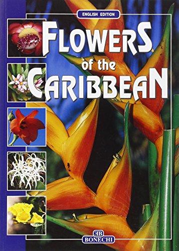 Flowers of the Caribbean - English Edition: Foggi, Bruno