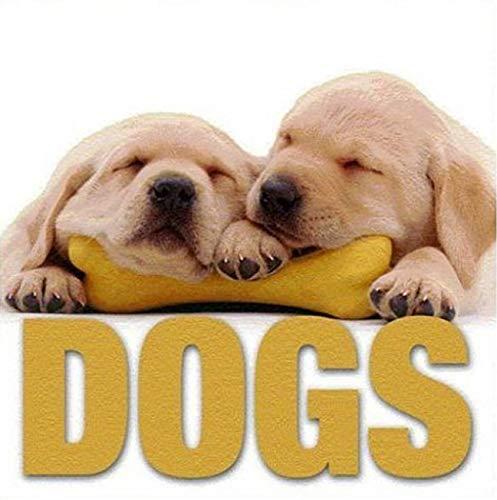 9788854401105: Dogs (CubeBook)