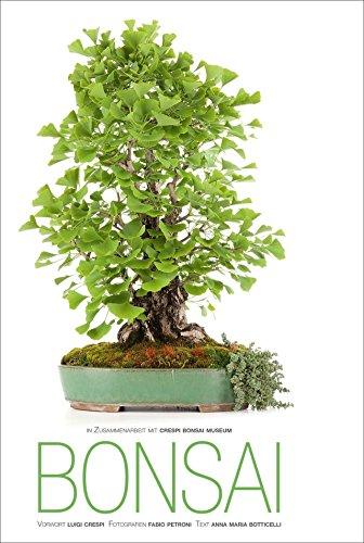 Bonsai: Annamaria Botticelli