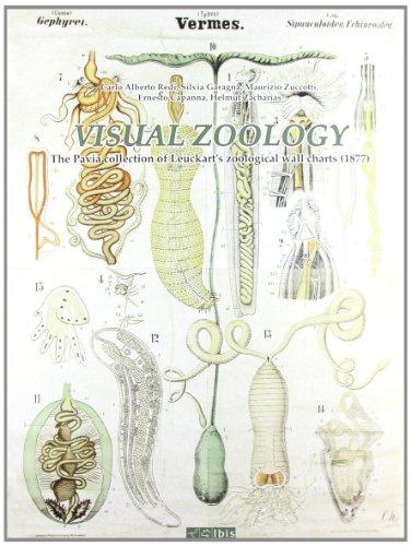 9788871641300: Visual Zoology