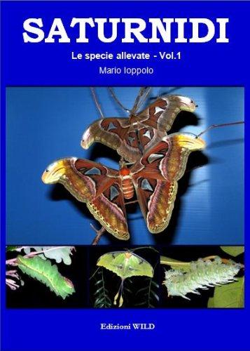 9788890333484: Saturnidi. Le specie allevate: 1