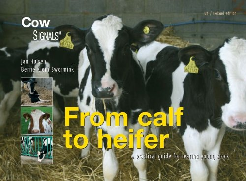 9789075280951: From Calf to Heifer: A Practical Guide for Rearing Young Stock (UK/ Ireland Edition)