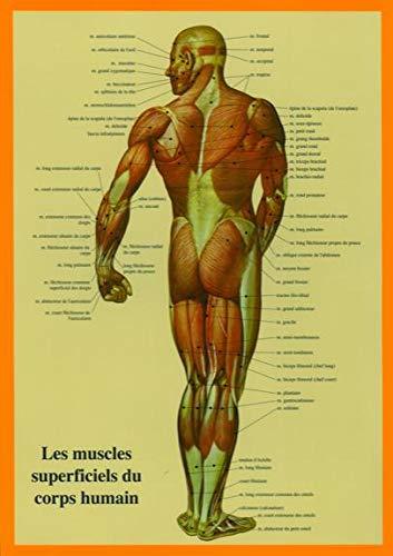 9789079887217: Muscles du Corps Humain