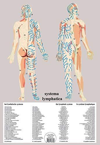 9789079887880: Systema Lymphatica