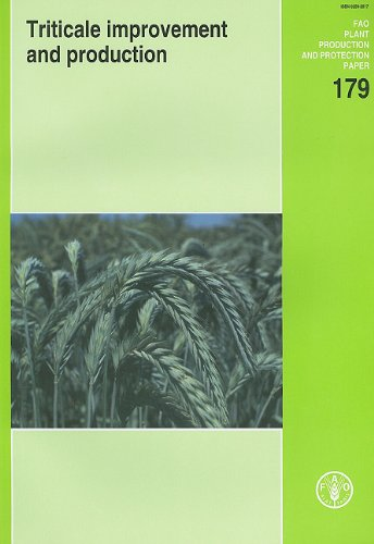 Triticale Improvement and Production (Paperback): Food and Agriculture