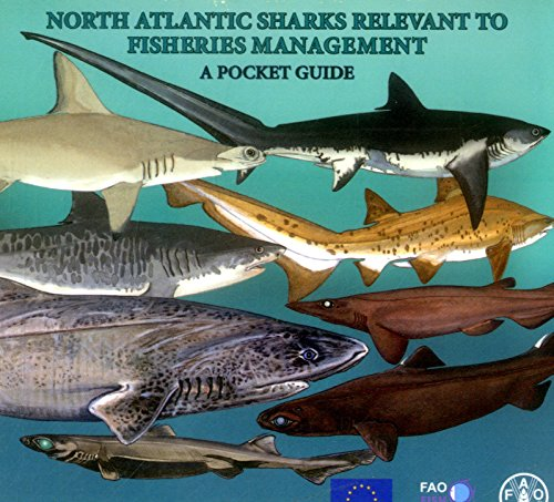 9789251073667: North Atlantic Sharks Relevant To Fisheries Management: A Pocket Guide
