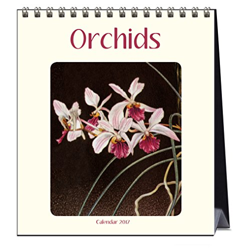Orchids (CL54187): Catch Publishing