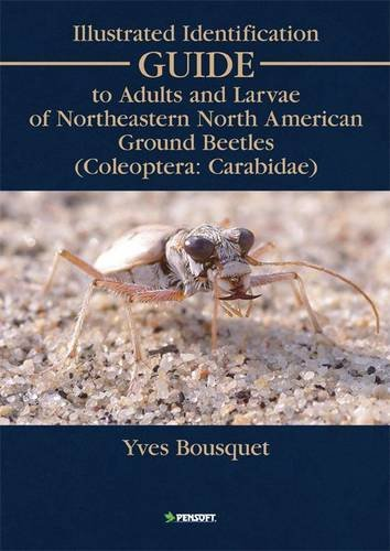 Illustrated Identification Guide to Adults and Larvae: Bousquet, Yves