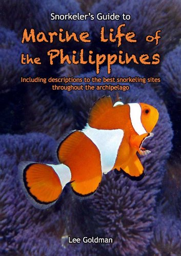 9789710321346: Snorkeler's Guide to Marine Life of the Philippines