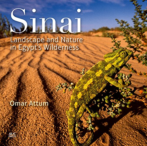 9789774166617: Sinai: Landscape and Nature in Egypt's Wilderness