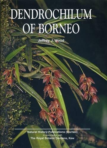 Dendrochilum of Borneo (Hardback): J. J. Wood
