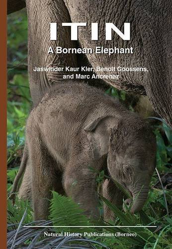 Itin: A Bornean Elephant: Ancrenaz, Dr. Marc,