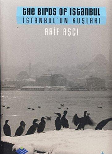 The Birds of Istanbul - Istanbul'un Kuslari