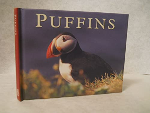 PUFFINS: KENNY TAYLOR