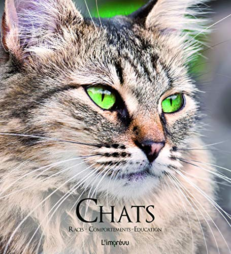 CHATS: COLLECTIF