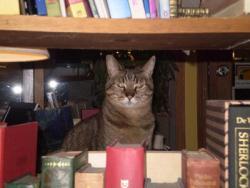 Kestrel Books