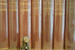 Denominator Books (IOBA)